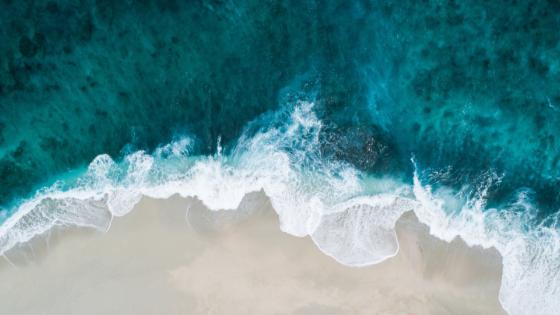 Il regalo del mare: l'alga bruna, fonte naturale di iodio