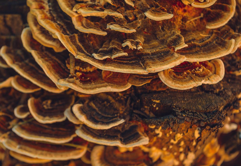 Curarsi con i funghi? Si può. Eccone le proprietà terapeutiche e curative.