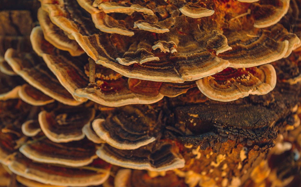 Les champignons peuvent-ils vous guérir ? Voici leurs propriétés thérapeutiques et curatives.