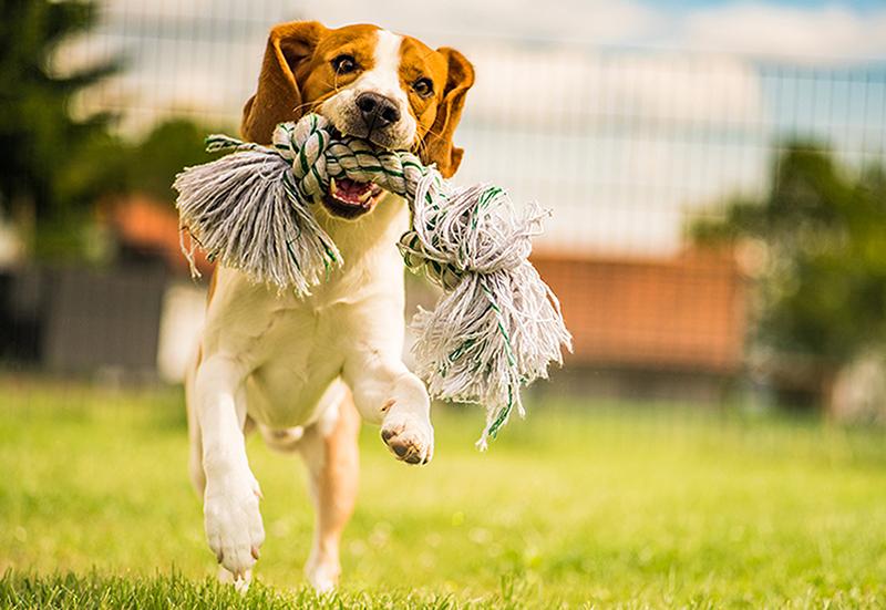 4 Tipps zur Unterstützung der Gelenke Ihres Hundes