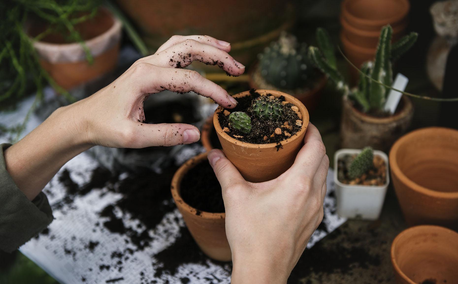 Giardinaggio: un hobby che migliora l'umore e l'autostima. Ma non solo